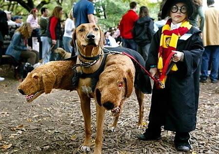 Harry potter e fofo