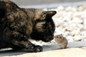 cat_and_mouse_03