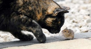 cat_and_mouse_06