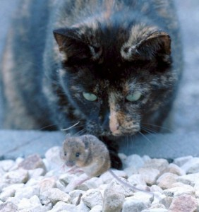 cat_and_mouse_09