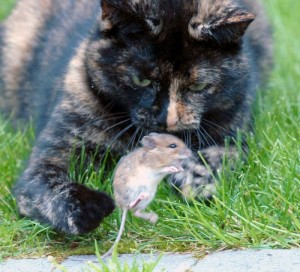 cat_and_mouse_10