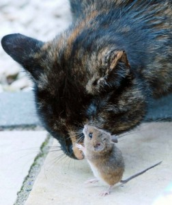 cat_and_mouse_11