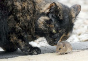 cat_and_mouse_13