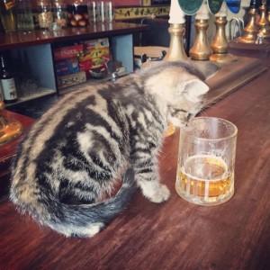 cat_pub_01
