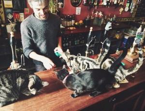 cat_pub_02