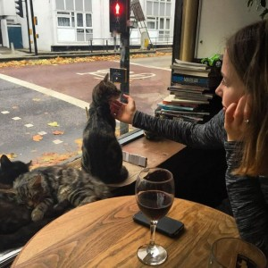 cat_pub_05