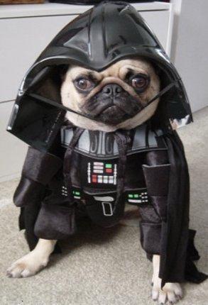 dog-star-war-cosplay