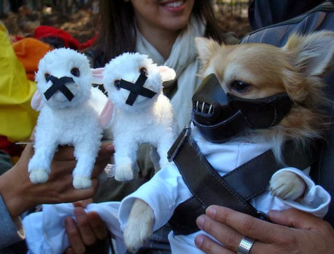 hannibal-lecter-dog-halloween-costume