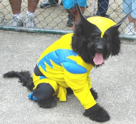 petcosplay-dog