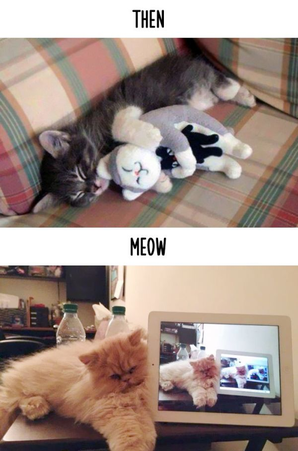 cats_then_now_02