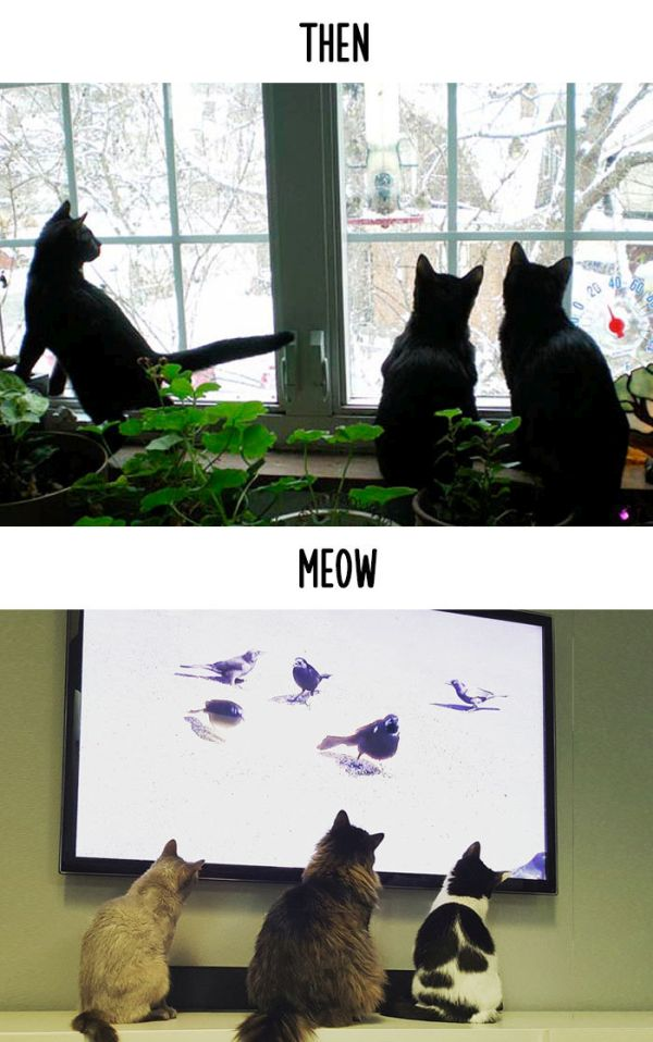 cats_then_now_03