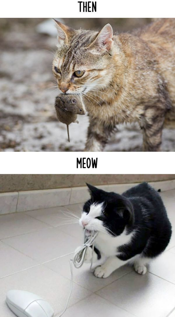 cats_then_now_07