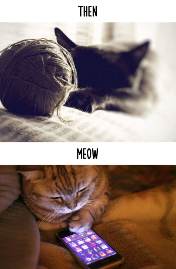 cats_then_now_08