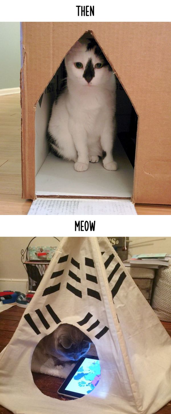 cats_then_now_09