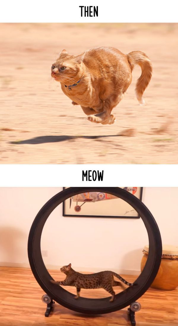 cats_then_now_10