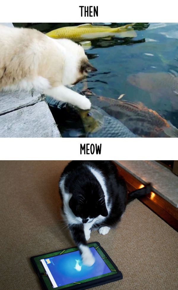cats_then_now_11