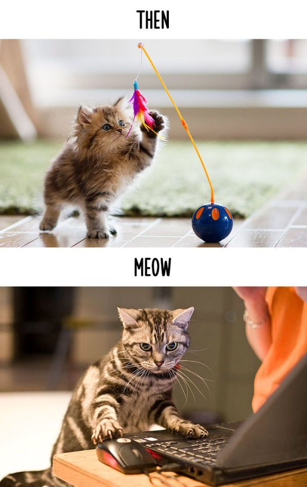 cats_then_now_12