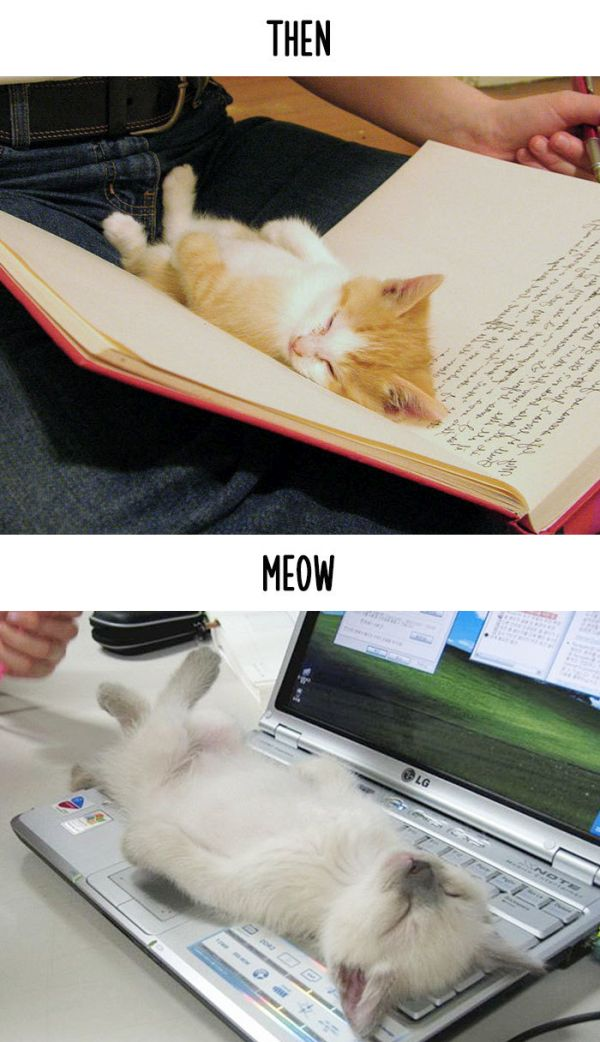 cats_then_now_14