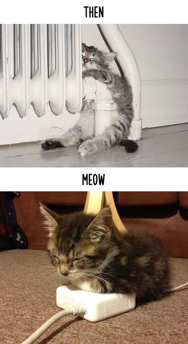 cats_then_now_15