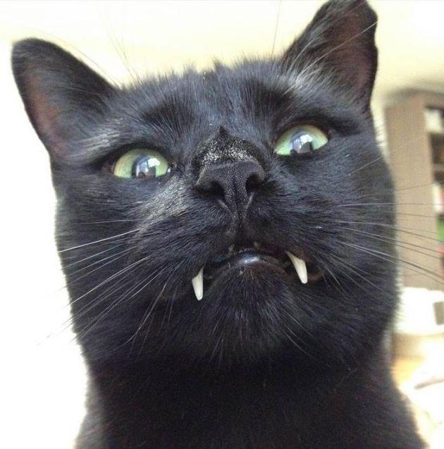 black_cat_vampire_04
