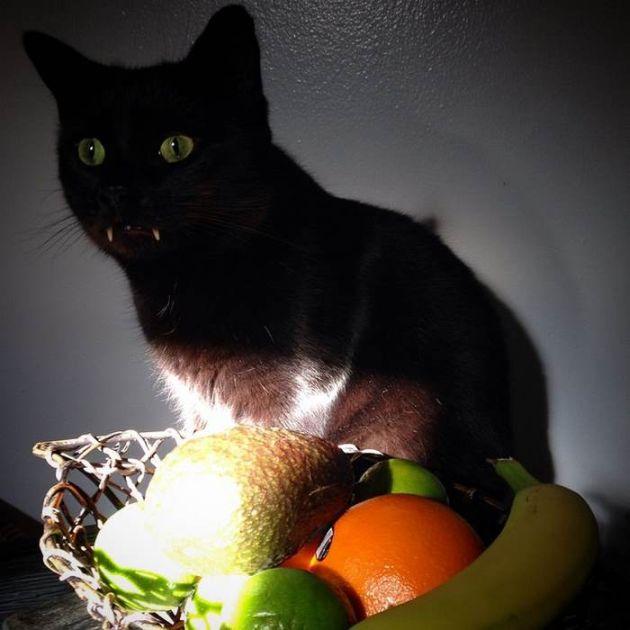 black_cat_vampire_07