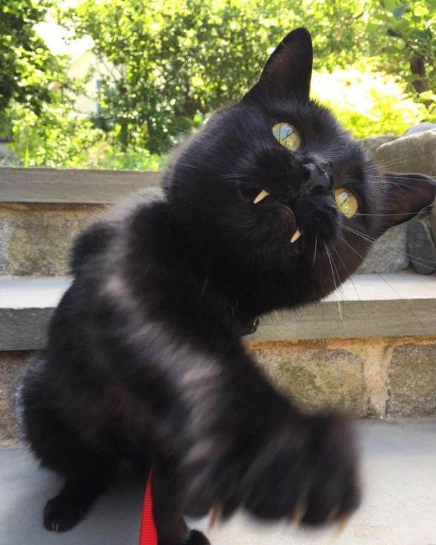 black_cat_vampire_08